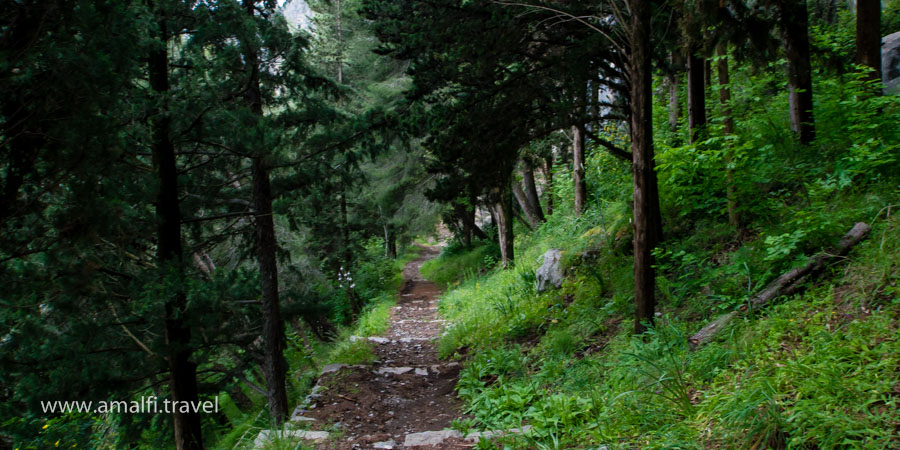 The path to the Tower of Ziro, Italy